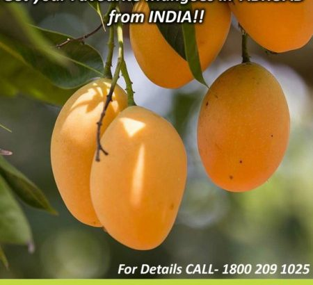 Gift King of fruits Mangoes to your liked person who they staying in Uk,USA, and Abroad.