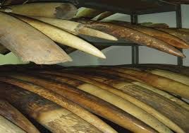 buy ivory, mammoth tusks, chunks and pieces, ivory and bone.