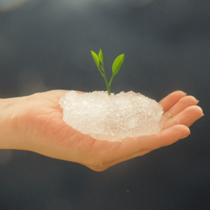 Buy hydrogel for agriculture – Hyderabad